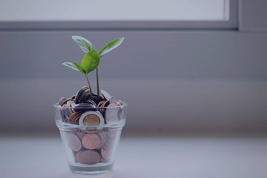 Plant with coins in pot
